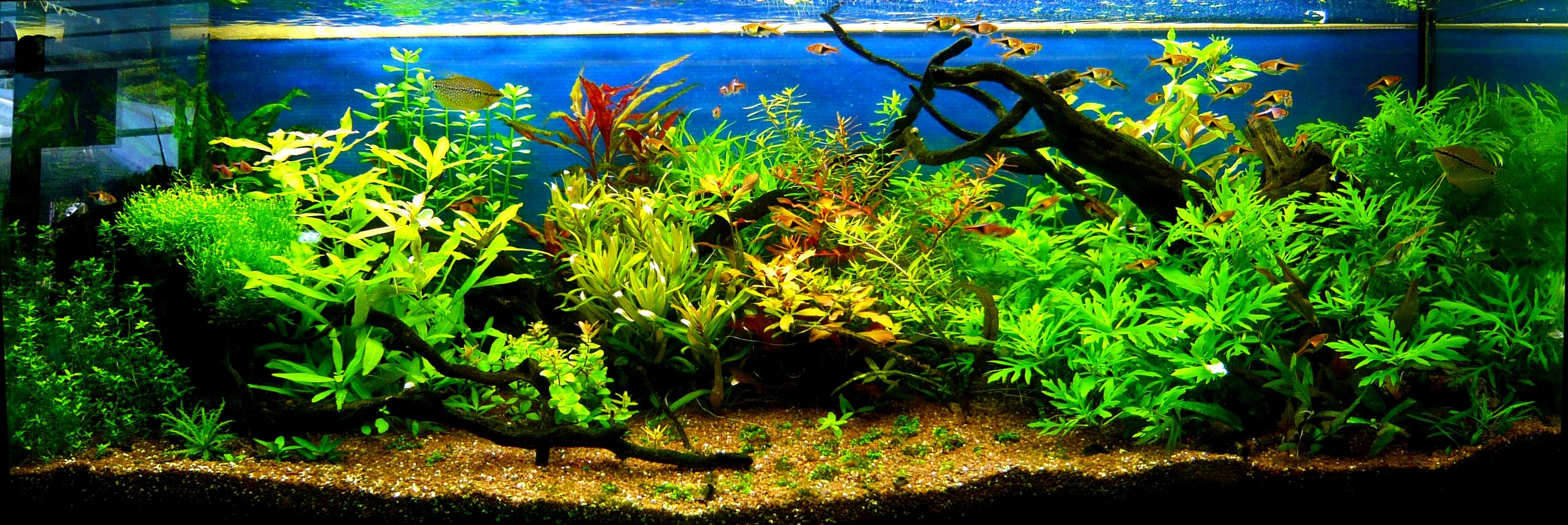 Acquario moderno torino casamia idea di immagine for Pesci acqua dolce online